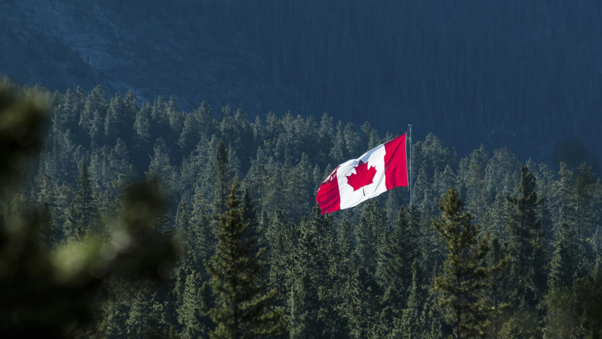 Canadian Flag in Forest